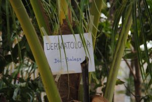 Tulum: Hier geht's zur Dermatologie ...